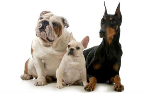 imagenes niños diferentes razas curso en l 237 nea online de razas de perros anatom 237 a y