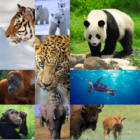 species protecting wildlife world wildlife fund celebrate earth day fox valley web design llc