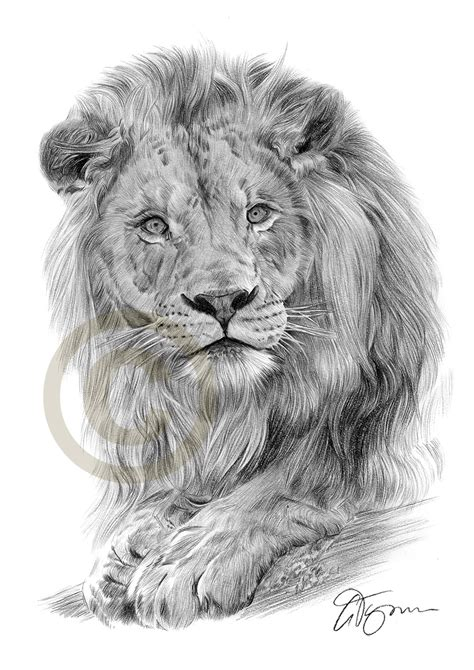 sketchbook of a zoo pencil drawing of a by artist gary tymon