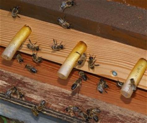 imker mainz 220 ber 12 000 bienenv 246 lker in rheinland pfalz proplanta de
