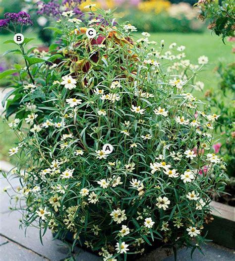 butterfly garden ideas top butterfly container garden ideas