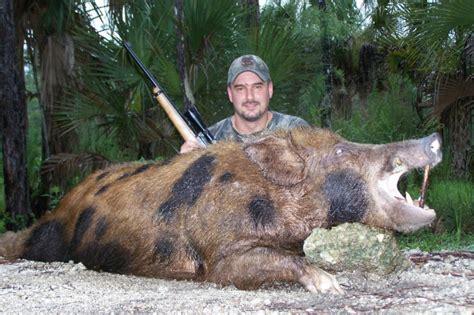 how to a to hunt hogs florid hog naples