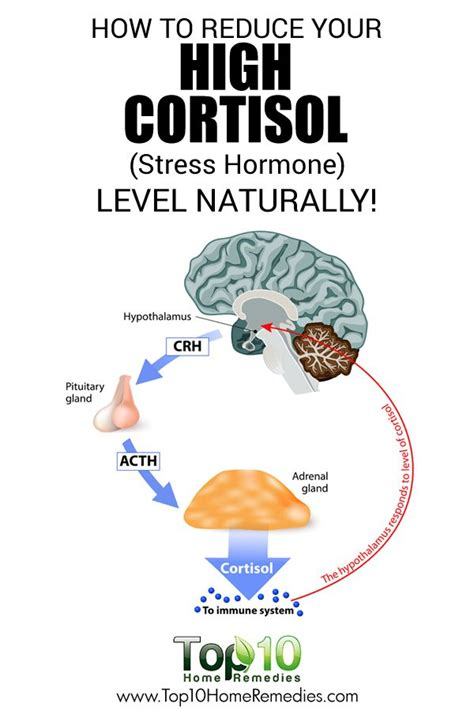 high cortisol levels 155 best images about how to health beauty on