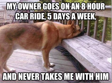 puppy problems world problems meme 11 dump a day