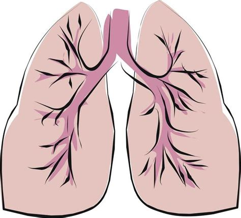 clipart lungs the gallery for gt lungs clipart