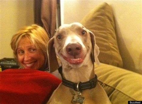 do dogs smile do dogs really smile bu forums