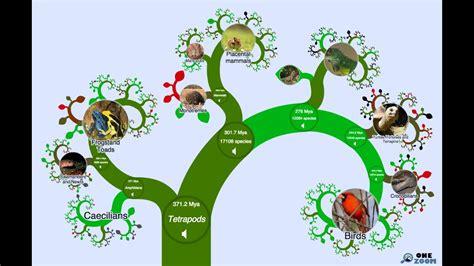 onezoom tree  life explorer  age  evolution