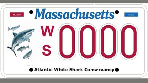 great white shark license plates may soon be available in