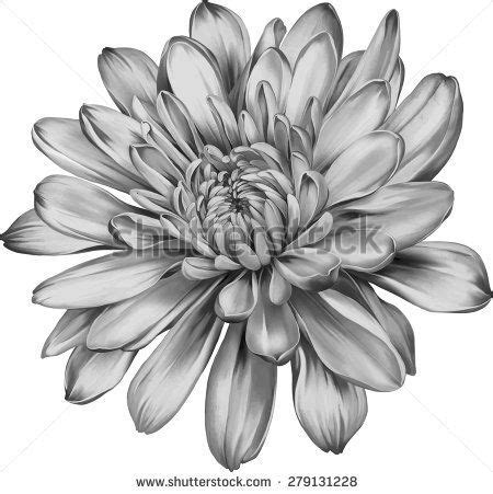 chrysanthemum flower tattoo chrysanthemum flower outline 20 awesome chrysanthemum