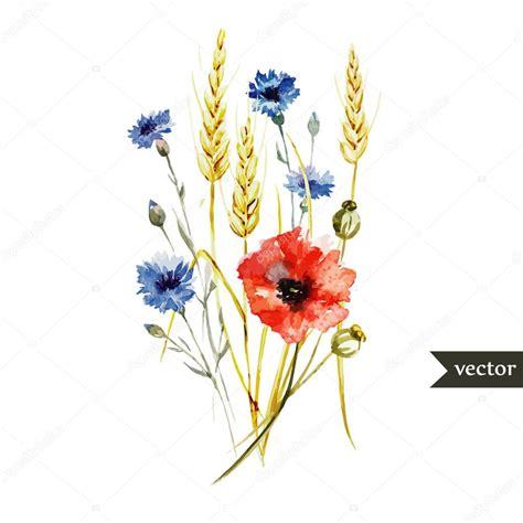 aquarelle coquelicot bleuet bouquet de bl 233 image