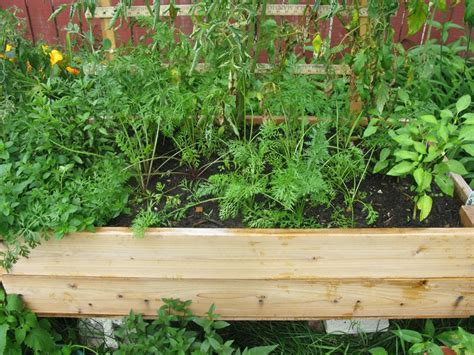 How To Start A Container Garden In Any Space Self Watering Vegetable Garden