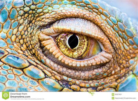 imagenes ojos de reptiles pix for gt reptile eyes close up eyes pinterest