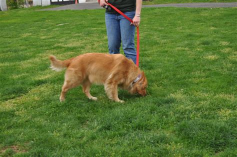 how to a puppy to outside your to in the yard petcarerx