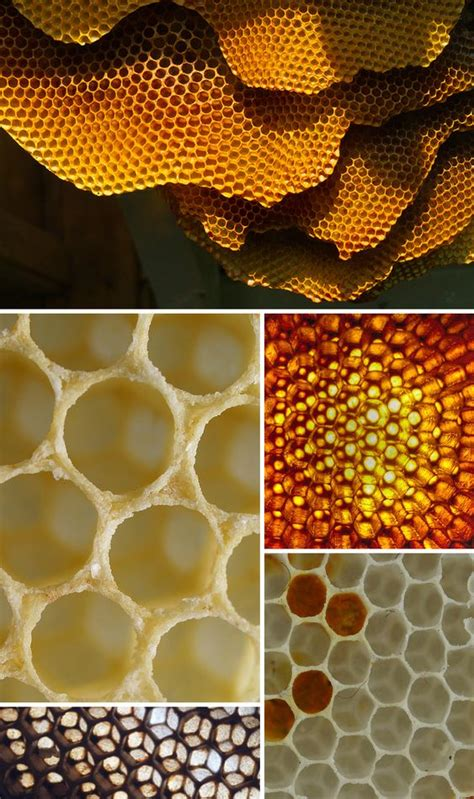 patterns in nature honeycomb honeycombs golden ratio and honeycomb pattern on pinterest