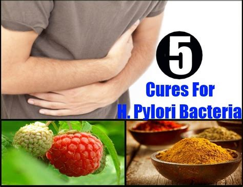 best treatment for helicobacter pylori 5 cures for h pylori bacteria home remedies remedy