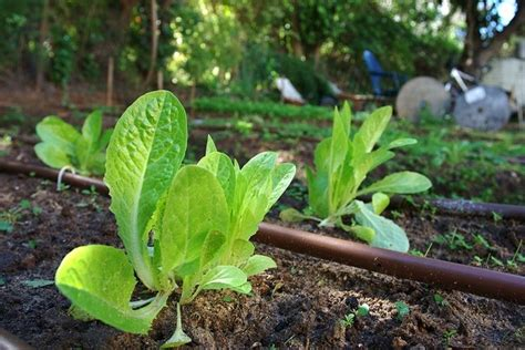 irrigazione giardini fai da te irrigazione fai da te irrigazione