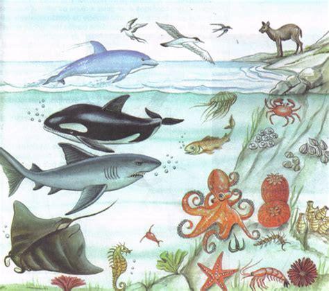 imagenes reino animal lo mas importante de los 5 reinos reino animal