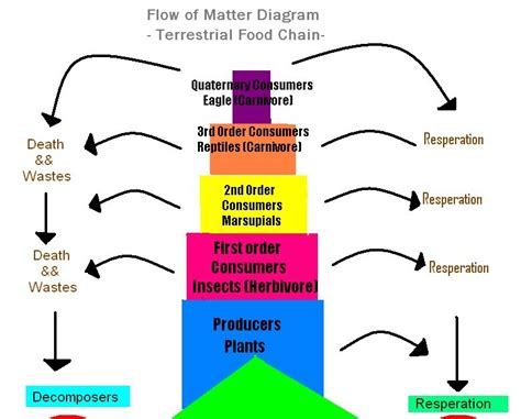 pattern of energy and matter flow order of the food chain best chain 2018