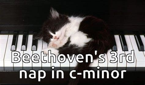 Piano Memes - 327 best images about great cat memes on pinterest cats