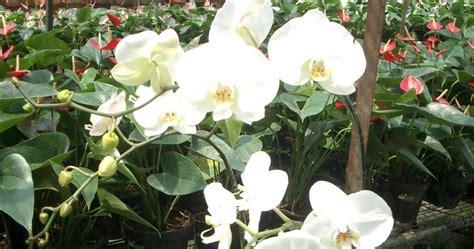 nama tumbuhan beserta nama latin  gambarnya