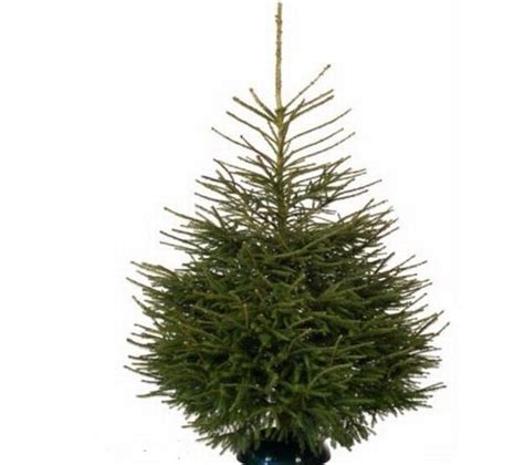where to get the cheapest christmas trees including ikea