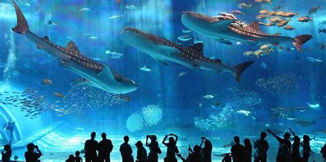 le plus grand aquarium du monde soonsoonsoon