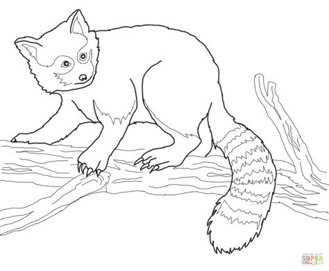 red panda coloring page red panda on tree coloring online super coloring