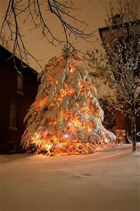 images  snow covered pines  pinterest christmas trees photographs  snow