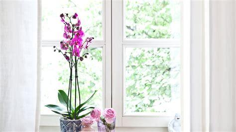 gardinen ideen fur sprossenfenster gardinen f 252 r sprossenfenster kollektionen fenster gardinen