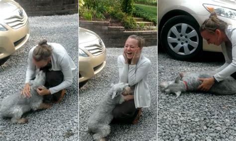 perro de coje a su duea un perro se desmaya al reencontrarse con su due 241 a