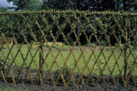 living willow fence on pinterest willow fence living fence and wattle fence