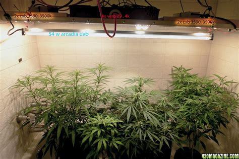 uvb light for plants the basics of plant lighting