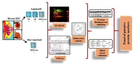 j proteins proteomics biomarkers for breast cancer using proteomics and