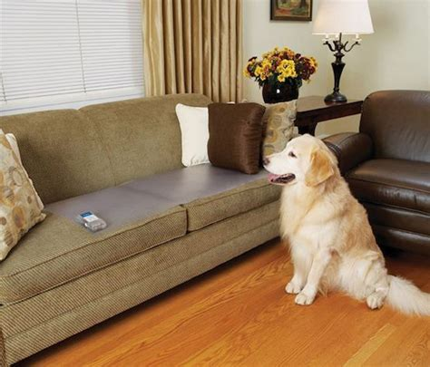 keep dog off couch when not home electronic dog cat training counter tops keep pets off the