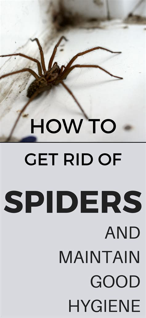 how do you get rid of spiders in your house how do you get rid of spiders in your house 28 images spider repellents 8 ways to