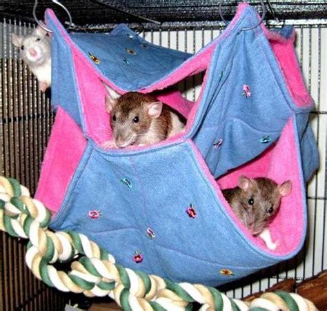 Rat Hammocks rat hammocks snugglebughammocks co uk