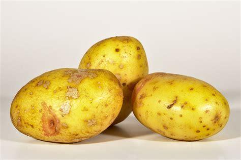 Potato Wiki by King Edward Potato
