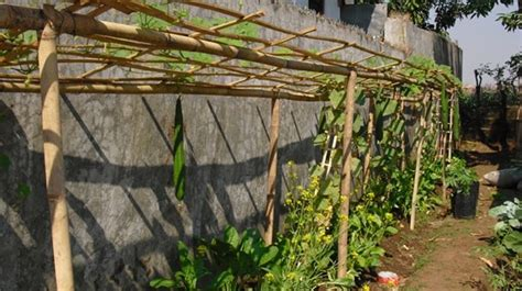 memanfaatkan lahan sempit pekarangan rumah  bertanam