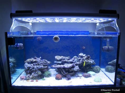 lade a led per acquari marini illuminazione a led per acquari marini lade led acquario
