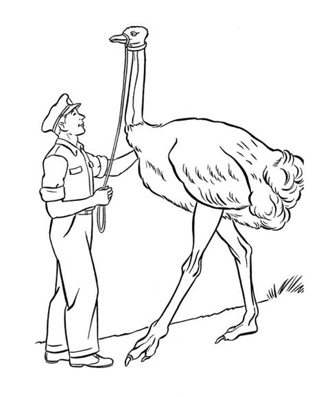 best coloring pages for kids com free printable ostrich coloring pages for kids