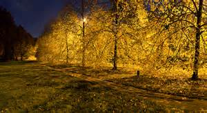 cambridge in color golden fall trees along the backs at cambridge