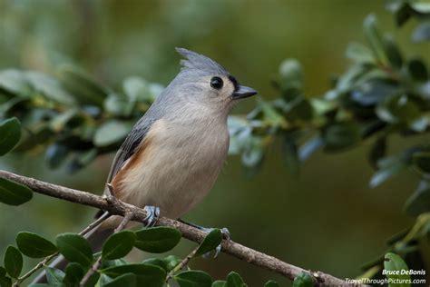 birds in your backyard backyard bird photography and color balance