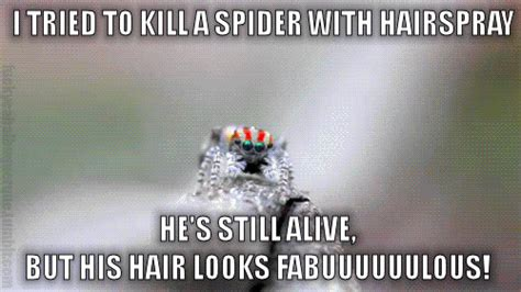Kill Spider Meme - i tried to kill a spider with hairspray bits and pieces