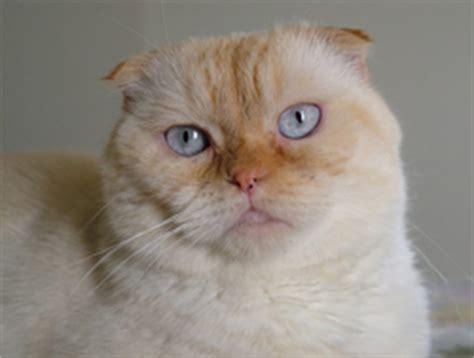 lentigo simplex cats mouth
