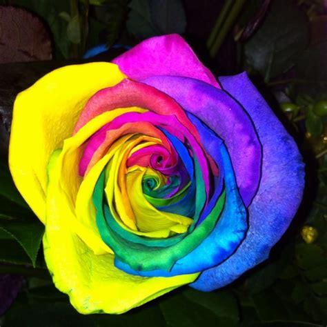 tie dye roses flowers