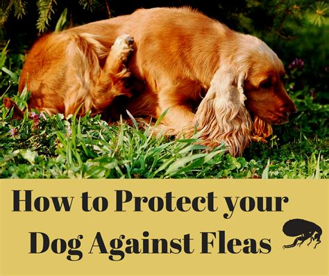 what to do when your has fleas protect your pet against fleas prevent flea bites