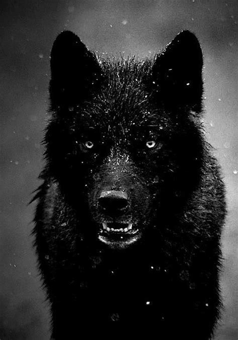 Pin by Dana Heinrich on Myne | Beautiful wolves, Black