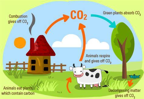 Diskon Gas Air Mata 90ml proses siklus karbon geograph88