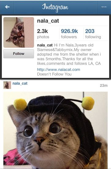 nala design instagram how to become successful with instagram content that