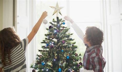 fir things first how to look after your christmas tree